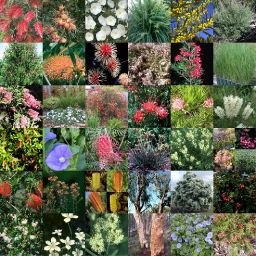 20 x Native Plants 4 Types Random Mixed Pack Hardy Shrubs Trees Grasses Garden Flowers