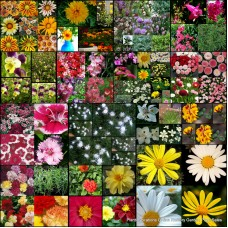 Mixed Plants x 20 Random Surplus Pack Excess Stock 4 Types Flowers Shrubs Bushes Trees Groundcovers Grasses