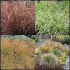 Grasses / Sedge x 10 Random Mixed Pack 3-4 Types Carex Plants Ornamental Garden Border Groundcover Clumping Hardy Frost Tough