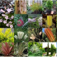 Native Plants Mixed x 100 Random Surplus Excess Stock 10 Types Garden Trees Shrubs Groundcovers Grasses Australian Hardy Tough