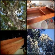 Eucalyptus River Red Gum x 5 Plants Hardy Native Trees camaldulensis Fast growing Firewood Shade Farm TImber Bird Attracting