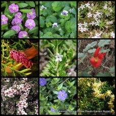 20 Random Native Groundcover Plants Mixed Flowers Garden Cottage Spread