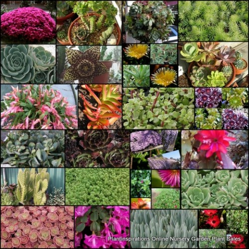15 Succulent Plants 7 Types in Pots Hardy Bonbonniere Wedding Favours Succulents Hanging basket Flowering Shrubs Ground cover