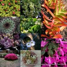85 Different Succulent Cuttings Pack No Pots Drought Plants Succulents Cacti Hardy Garden